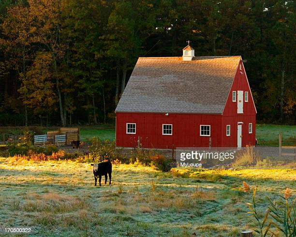 A Red Barn And Frost Covered Field In The Early Morning Light