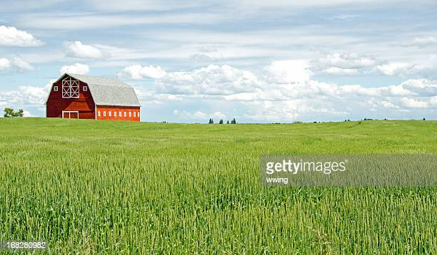 Red Barn and Grain Field