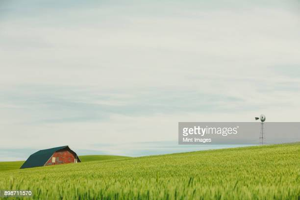 Red barn in the landscape, on the rolling hills of summer wheat, Palouse,