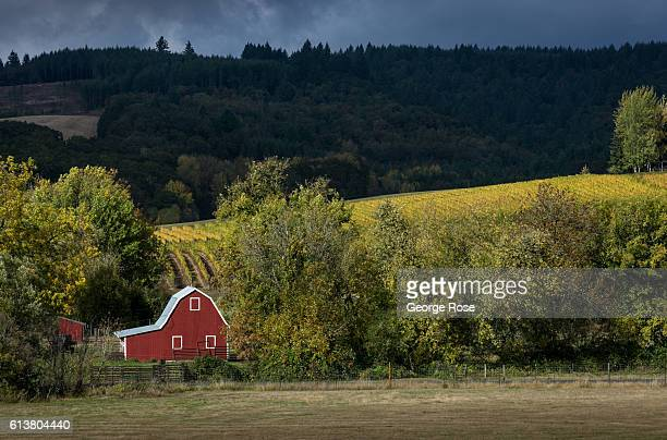 A red barn located in the EolaAmity Hills AVA is viewed between sun breaks on October 5 near Amity Oregon Dundee Carlton McMinnville Amity and...