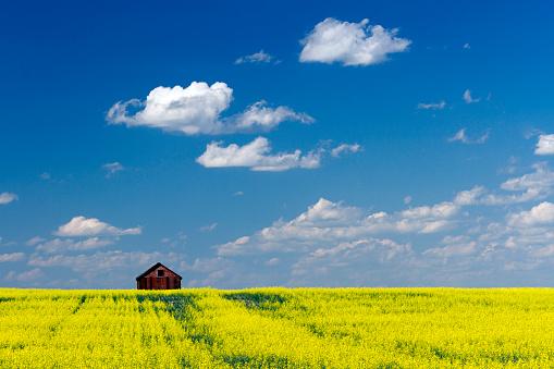 Red Barn Prairie Canola Field 1020670990