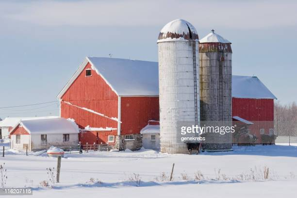 Red Barn with Silos and Cows in Winter