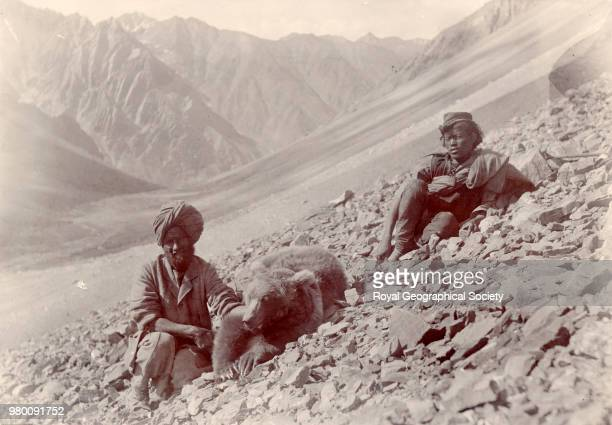 Red bear of Spiti at Lursa just north of the Babeh Pass between Spiti and the Upper Sutlej Valley at an altitude of 18 300 feet Punjab India 1900