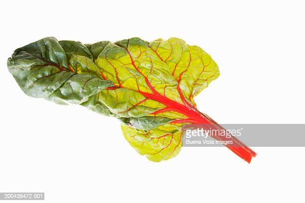 Red beef leaf (Beta vulgaris)