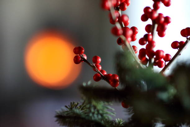 red berries and fir branches