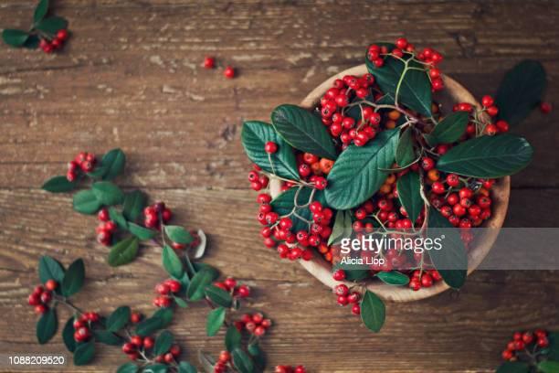 red berries - november stock-fotos und bilder