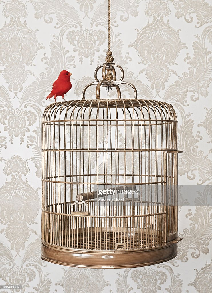 Red Bird Perched on exterior of birdcage : Stock Photo