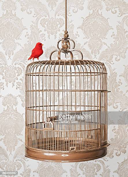 Red Bird Perched on exterior of birdcage