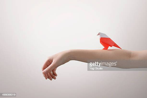Red bird perched on the arm