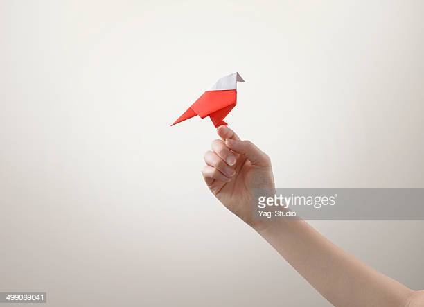Red bird perches on a hand