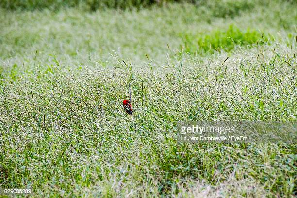 Red Bird Surrounded By Plants