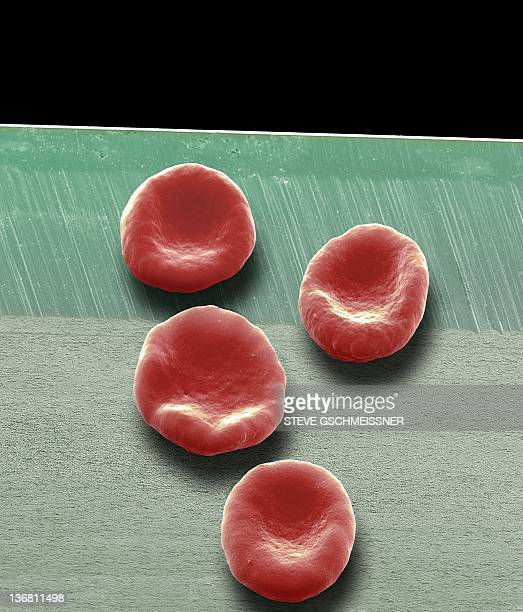 red blood cells, sem - red blood cell stock pictures, royalty-free photos & images