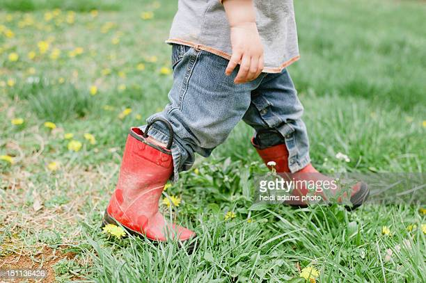 red booted toddler in dandelion grass - adams tennessee stock pictures, royalty-free photos & images