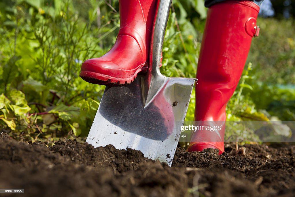 Red Boots Digging Over Soil With Spade in Garden : Stock Photo