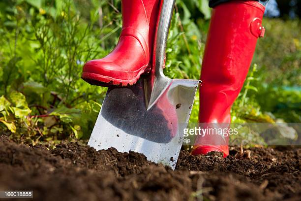 red boots digging over soil with spade in garden - gräva bildbanksfoton och bilder