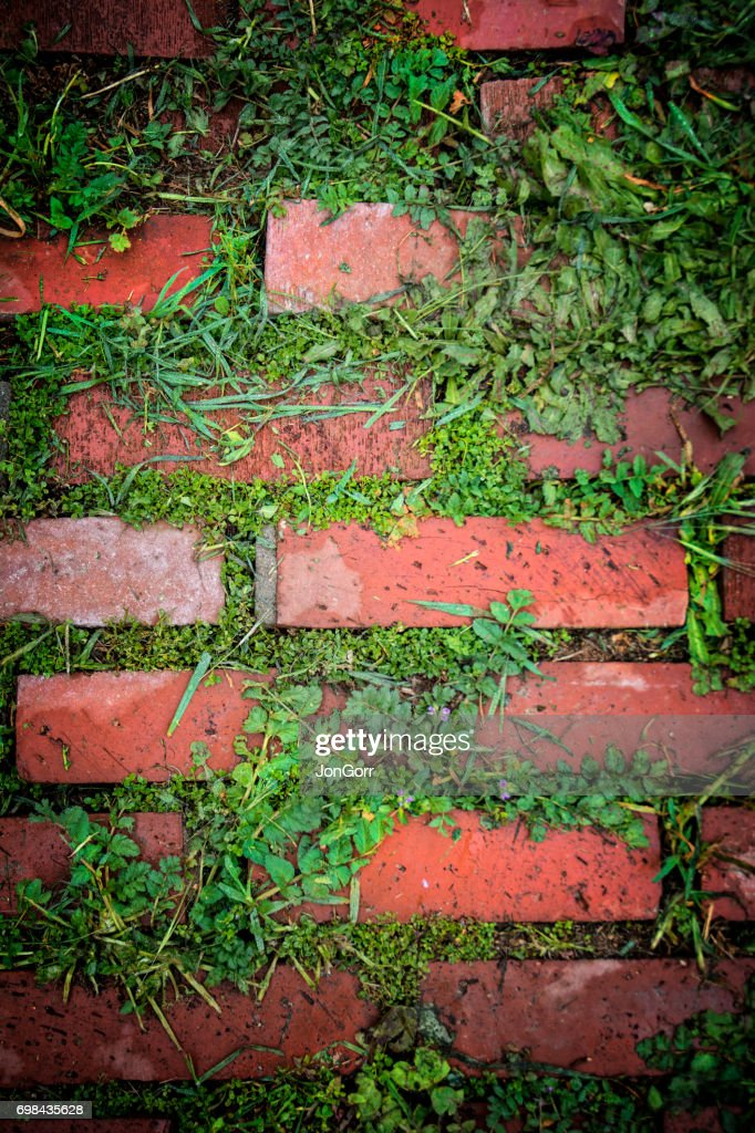 Red Brick Patio Pavers With Green Weed Growth : Stock Photo
