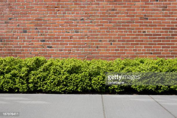 A red brick wall with a sidewalk and green hedges