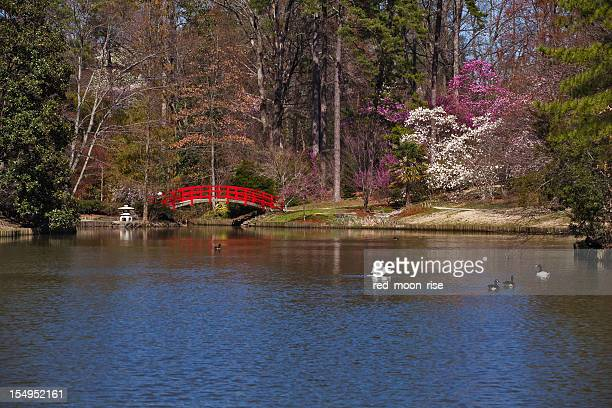 red bridge in japanese garden - duke v north carolina stock photos and pictures