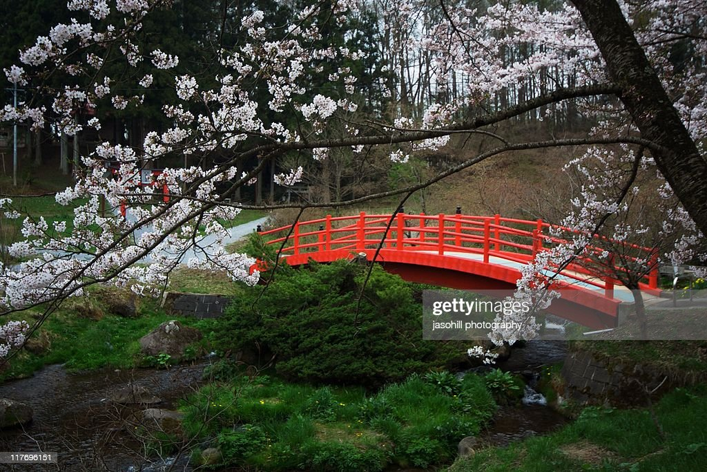 red bridge with cherry blossoms in japan stock photo