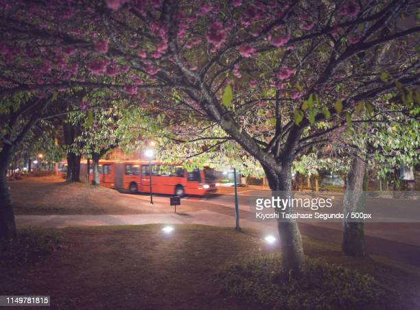 red bus - curitiba stock pictures, royalty-free photos & images