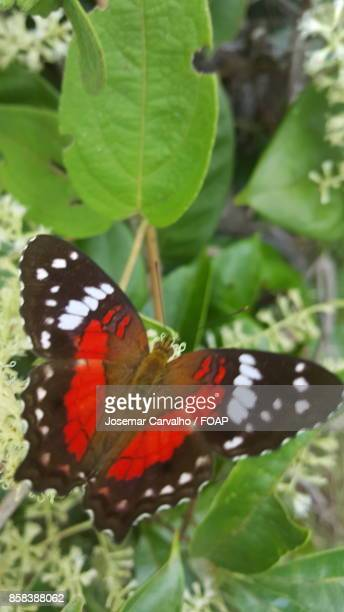 Red butterfly on green leaf