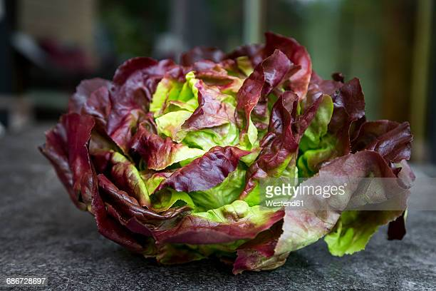 red butterhead lettuce, close up - leaf lettuce stock photos and pictures