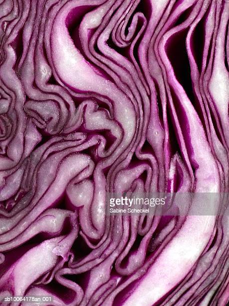 Red cabbage, close up
