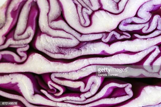 red cabbage close-up - cabbage family stock photos and pictures