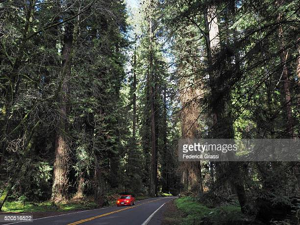red car driving along the avenue of the giants, california - humboldt redwoods state park stock photos and pictures