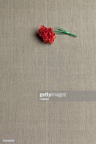A red carnation on linen