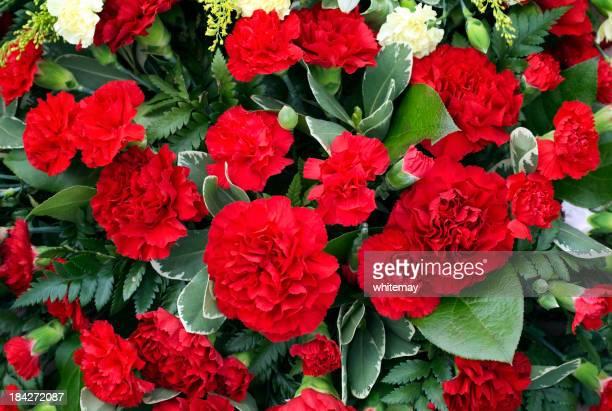 レッド carnations