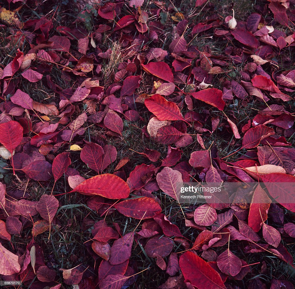 Autumn Leaves : News Photo