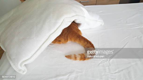 red cat hidden under pillow - cat hiding under bed stock pictures, royalty-free photos & images