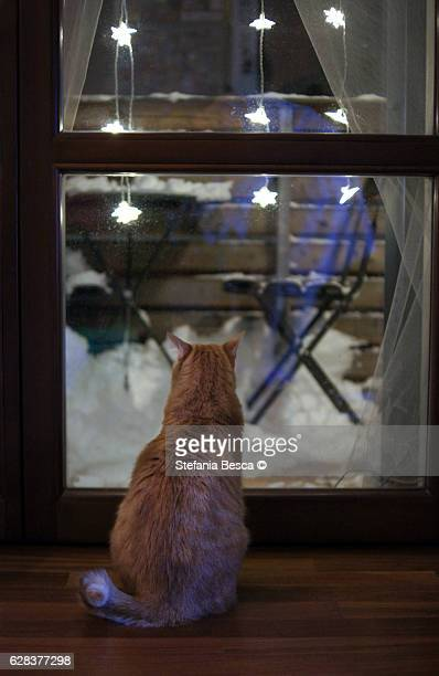 red cat looks at the snow outside the window