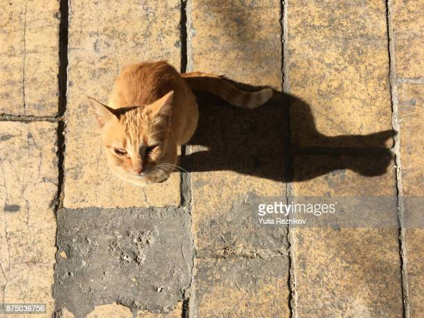 Red cat sitting in his shadow