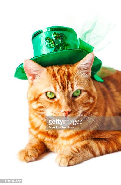 red cat with leprechaun hat.  st patricks day concept - cat with red hat stock pictures, royalty-free photos & images