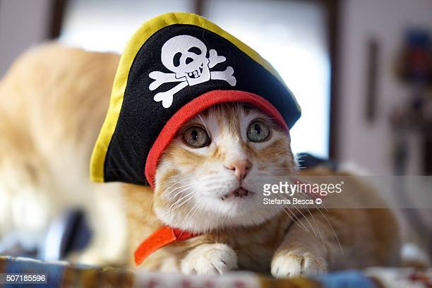 red cat with pirate hat - puss pics stock photos and pictures