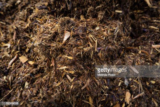 red cedar mulch - mulch stock pictures, royalty-free photos & images