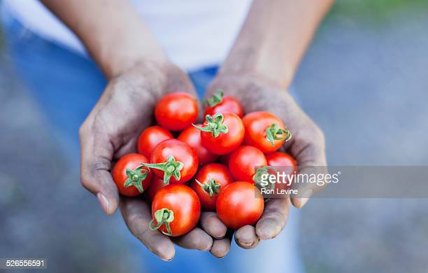 Red cherry tomatoes in girl's hands