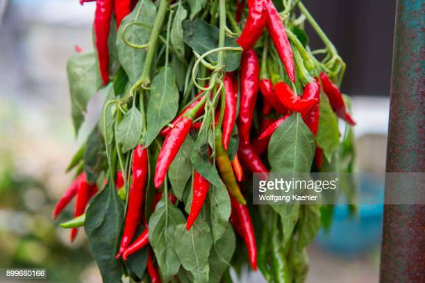 Red chili peppers drying in the small village of Ashigawa on Honshu Island in Japan