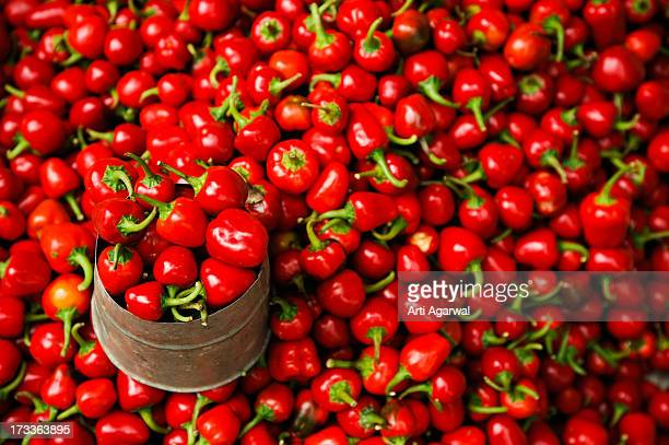 Red Chillis for Sale