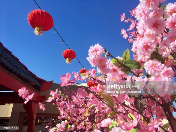 Red Chinese Lanterns & Cherry Blossoms