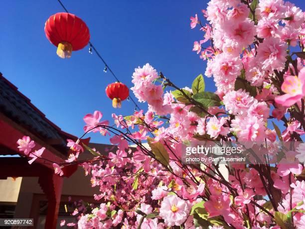 Red Chinese Lanterns & Palm Tree