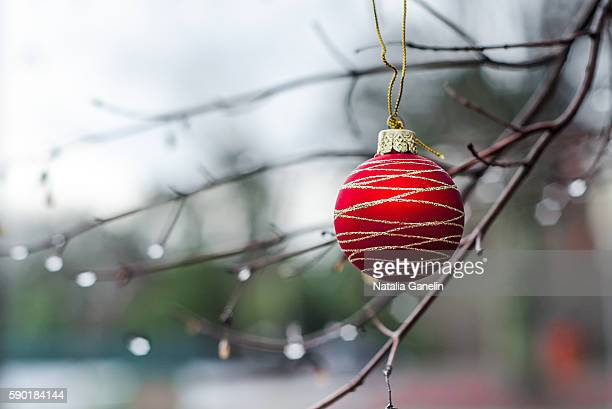 Red Christmas ball hanging from tree branch