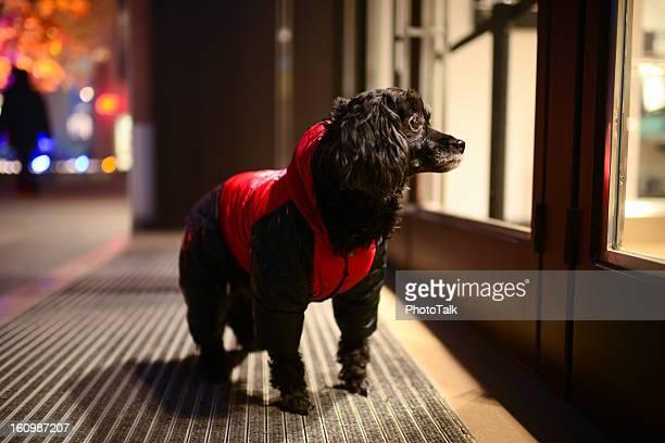 Red Clothing Dog