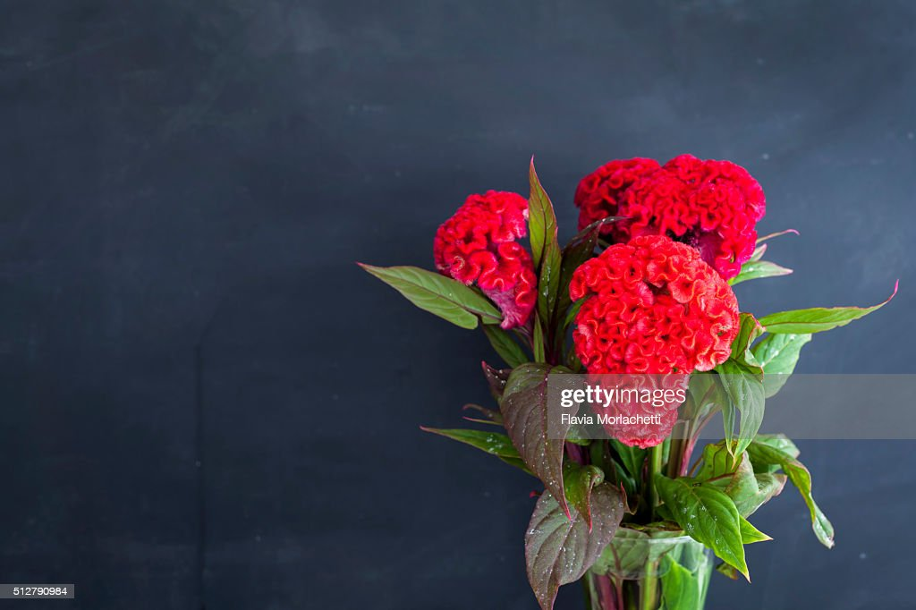 Red cockscomb flowers (celosia cristata) : Stock Photo