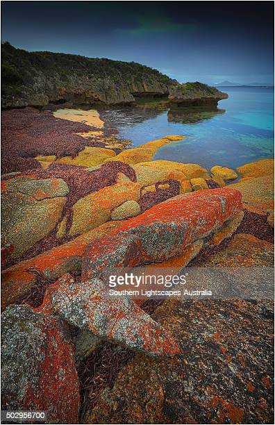 Red coloured boulders, caused by lichen growing at the high tide mark on Flinders Island, Bass Strait, Tasmania, Australia.