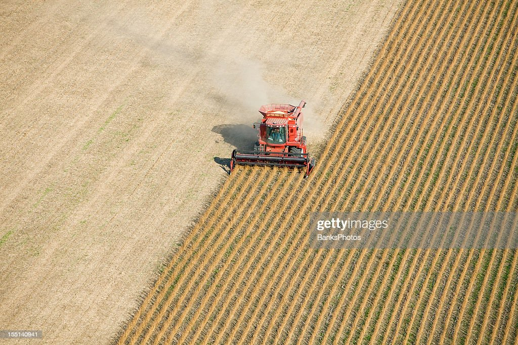 Red Combine Harvesting Fall Soybean Field Aerial : Stock Photo