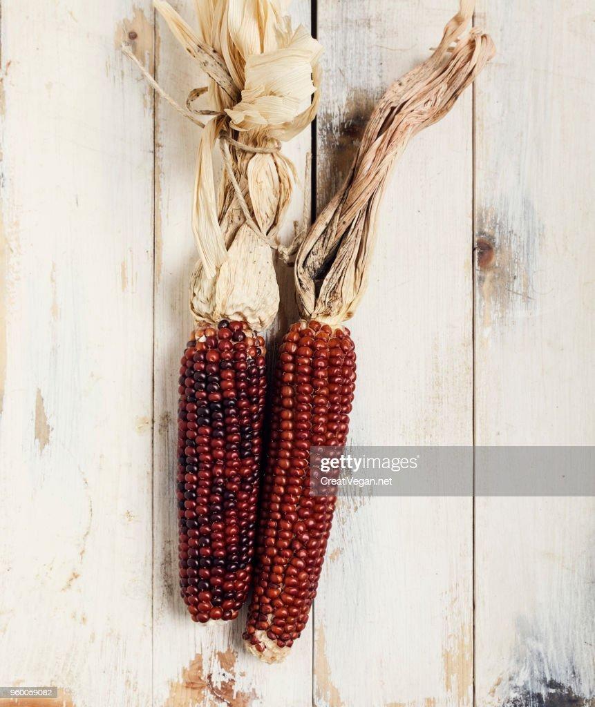 Red corn cobs : Stock-Foto