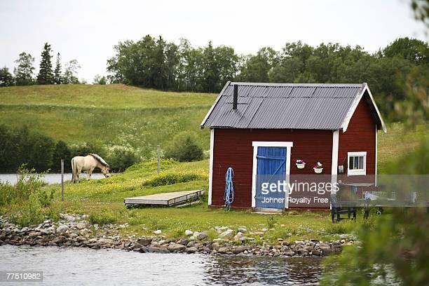a red cottage a horse in a en closed pasture jamtland sweden. - schweden stock-fotos und bilder